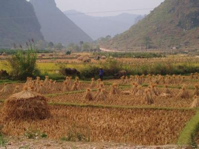 Wheat in China; photo by Hector Garcia via Flickr
