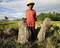 Timor: Where Has All the Aid Gone?