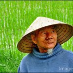 Vietnamese farmers grow most of the rice their country consumes.  Photo by Image MD.
