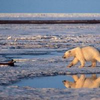 Preventing a Blowout in the Arctic