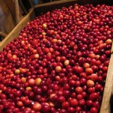 Fracking our Thanksgiving Feast