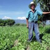 honduras-farmer