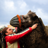 Camel Wrestling on the Aegean Coast
