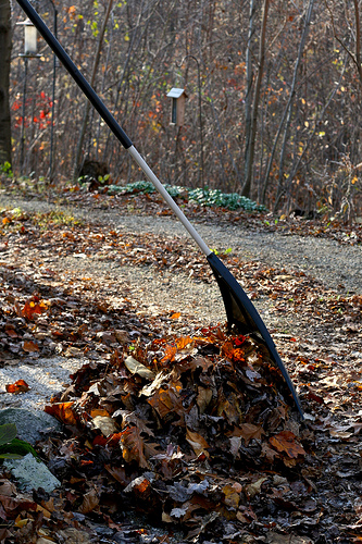 The Leaf Blower Divide