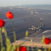 flowers overlooking a coal mine