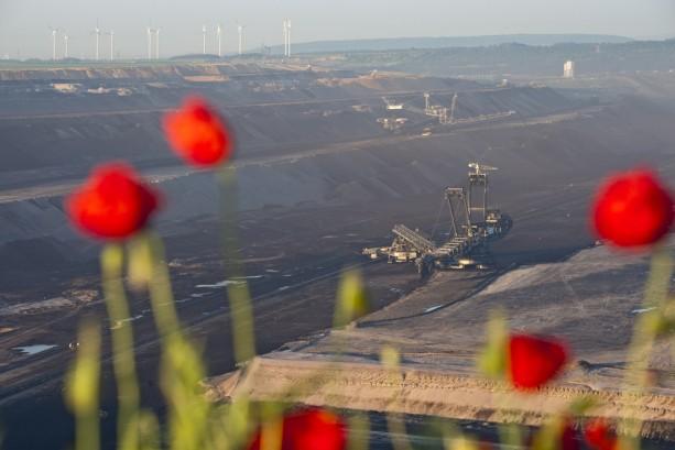 flowers overlooking a coal mine