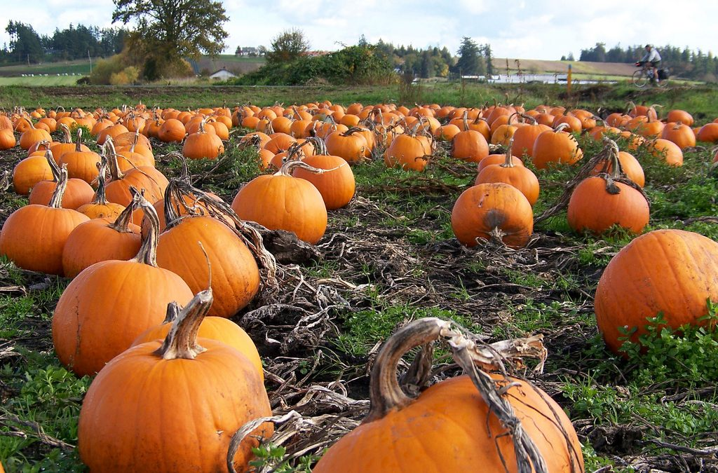 The Great Pumpkin Shortage Is Coming